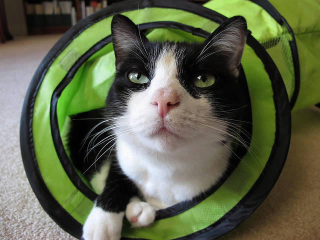 Cat playing in green tube