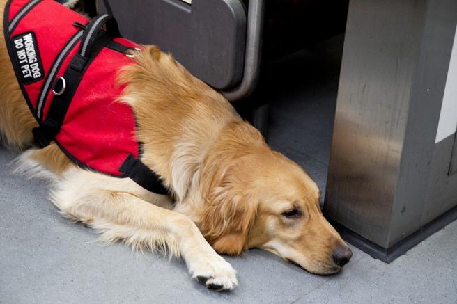 service dog in subway