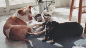 MARK KONING'S DOGS PETEY AND CASEY