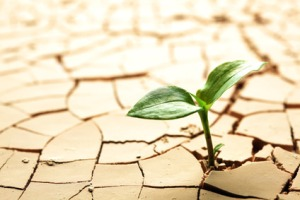 plant growing through cracked dirt
