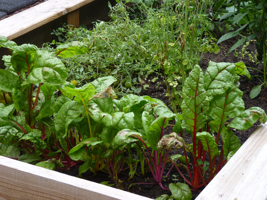 vegetables growing in a box