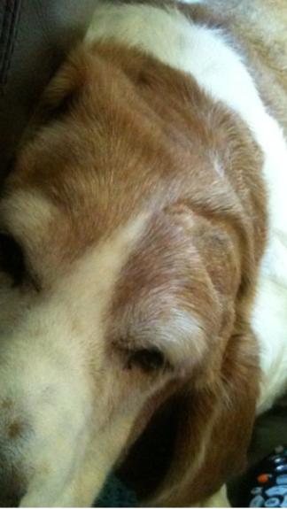 Shelley's dog Gaby