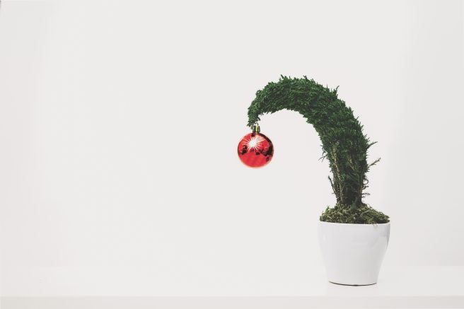 green-plant-with-red-ornament-planted-in-white-ceramic-pot-1048041